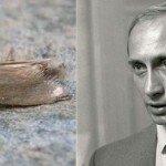Триумф моли (15 лет путинизма в РФ)