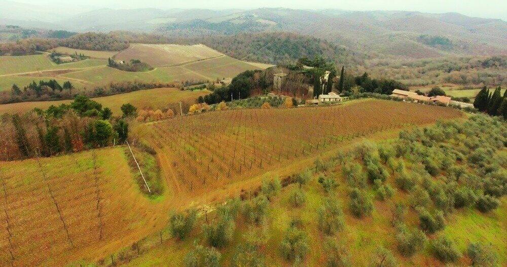 ВиноградникиМедведева в Анапе и Тоскане: